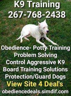 Dog training any dog working with big and small