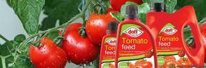 Buy Branded Miracle-Gro Fertiliser for Tomato Plants