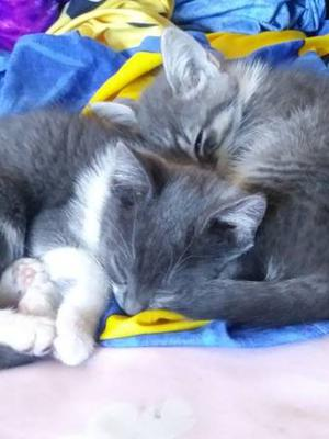 2 Kittens looking for new homes