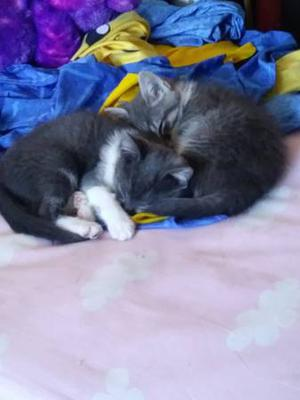 Kittens looking for new loving homes