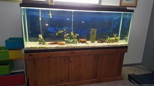 150 gallon fish tank