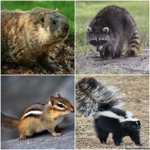 Best Wildlife Control Solutions