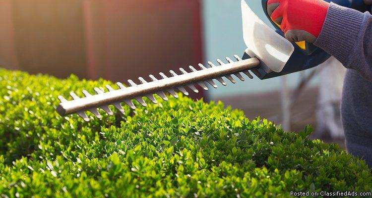 Hedge Trimming Services in Calgary