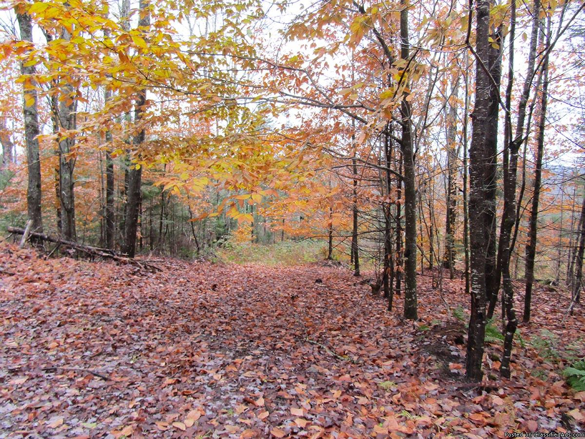 40 Acre Wooded Lot of Land w/ Trails, Hardwoods & Softwoods