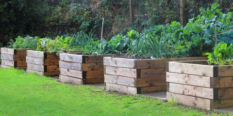 Sycamore Hill Construction specializes in raised garden