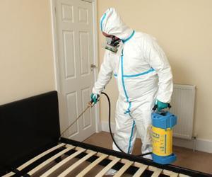 Bed Bugs Exterminator & Extermination Services Hamilton |