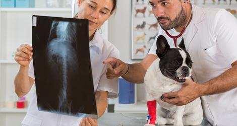 Animal Clinic in Etobicoke, ON | Top Vets | Animal Vet in