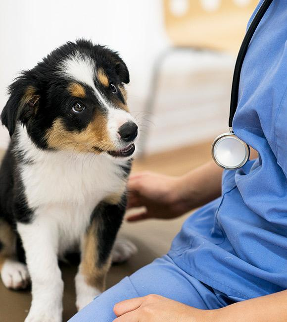 Best Animal Clinic in Etobicoke | Veterinarians in Etobicoke