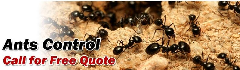 Ants Control Services in Vancouver | Advancepest.ca