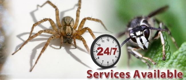 Ants Control in Maple Ridge, Pitt Meadows & Mission