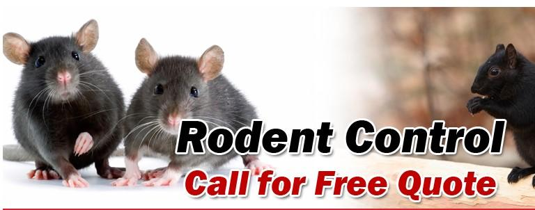 Pest Control Services in Burnaby & Vancouver |