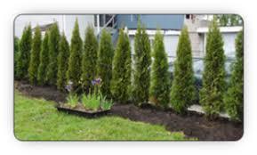 Plant a tree hedge or plant tree