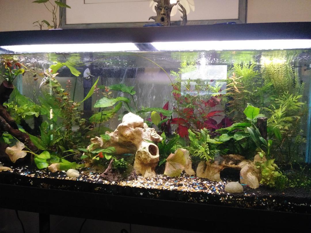 75 Gal planted Aquarium
