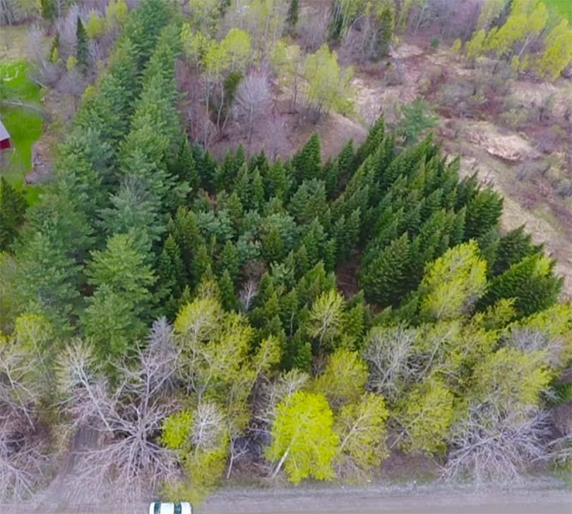 5.1 Acre Building Lot in the Country, Survey & Wastewater