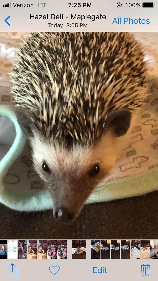 8 month old boy hedge hog