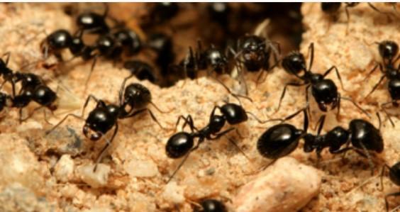 Bed Bug Control Richmond | Advance Pest Control Inc.