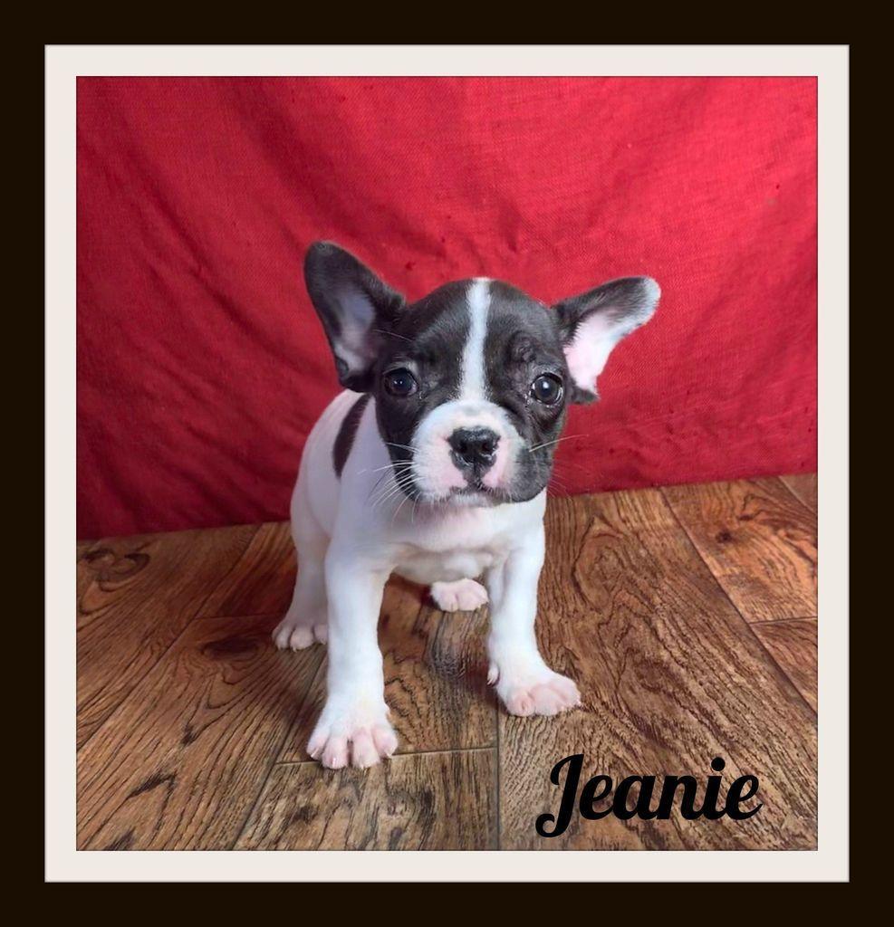 Jeanie Female Frenchton