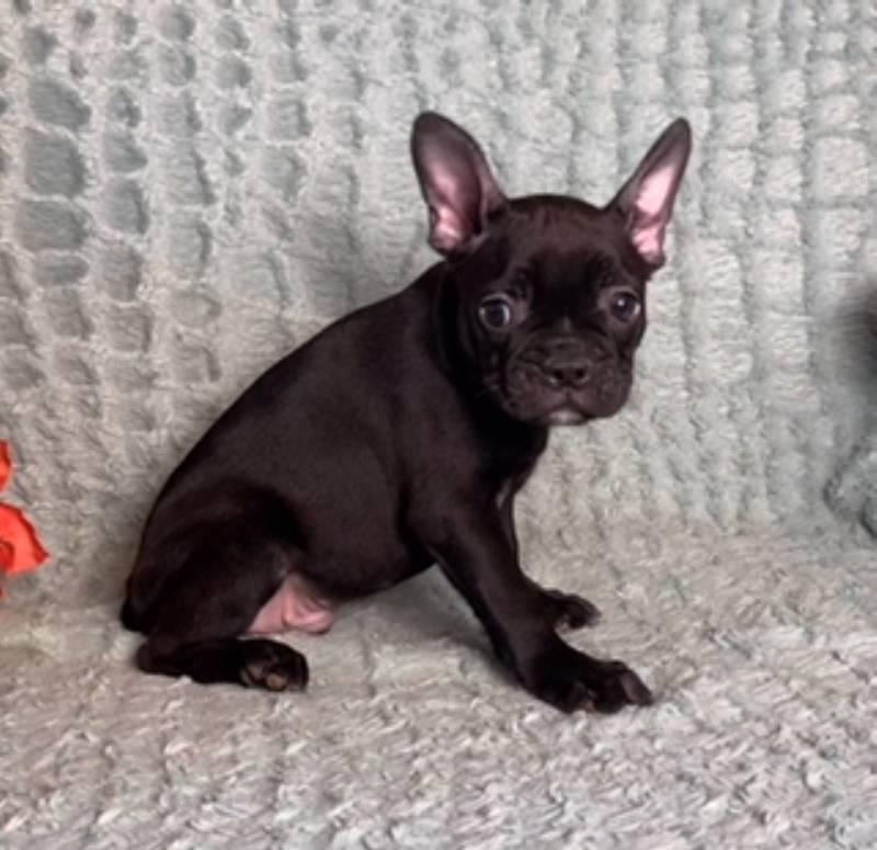 Joey Male Frenchton