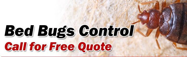 Mouse Control Coquitlam | Advance Pest Control Inc.