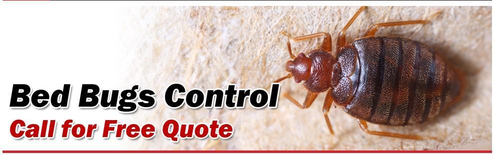 Pest Control Maple Ridge | Advance Pest Control Inc.