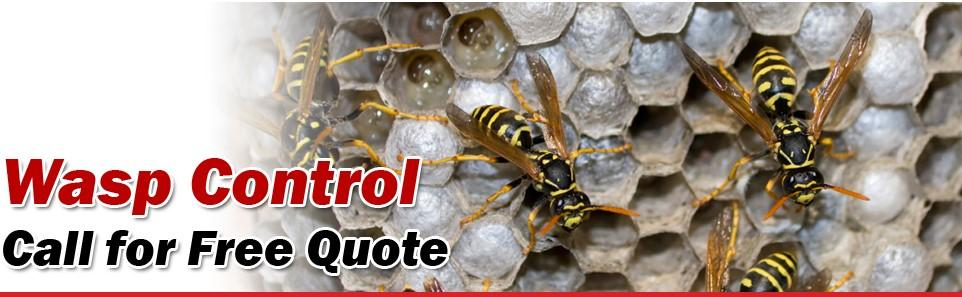 Wasp Control Services in Vancouver | Advancepest.ca