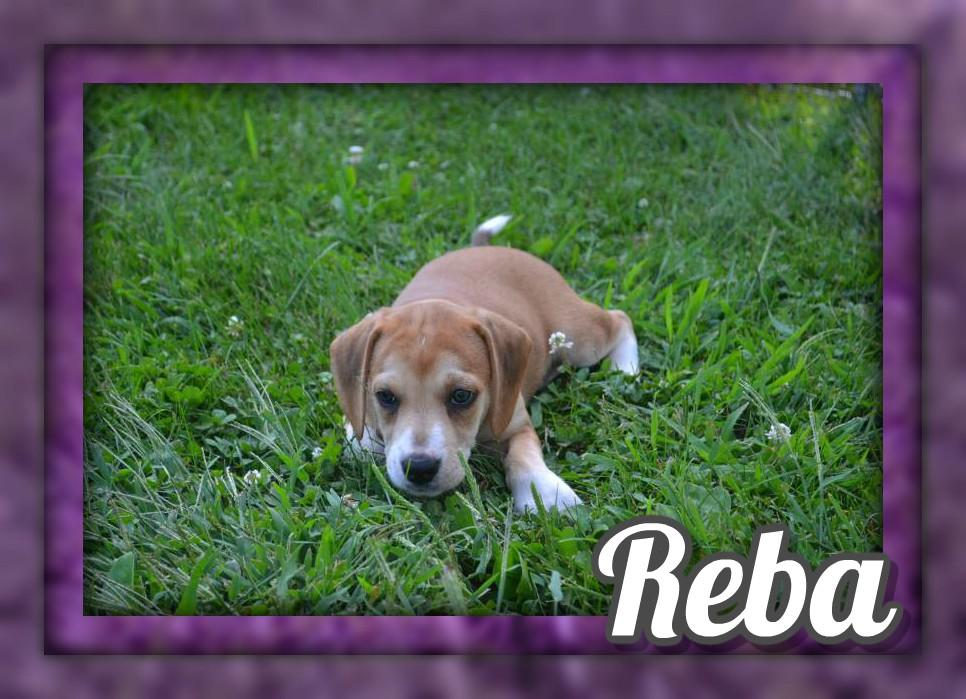 Reba Female Mountain Cur Mix