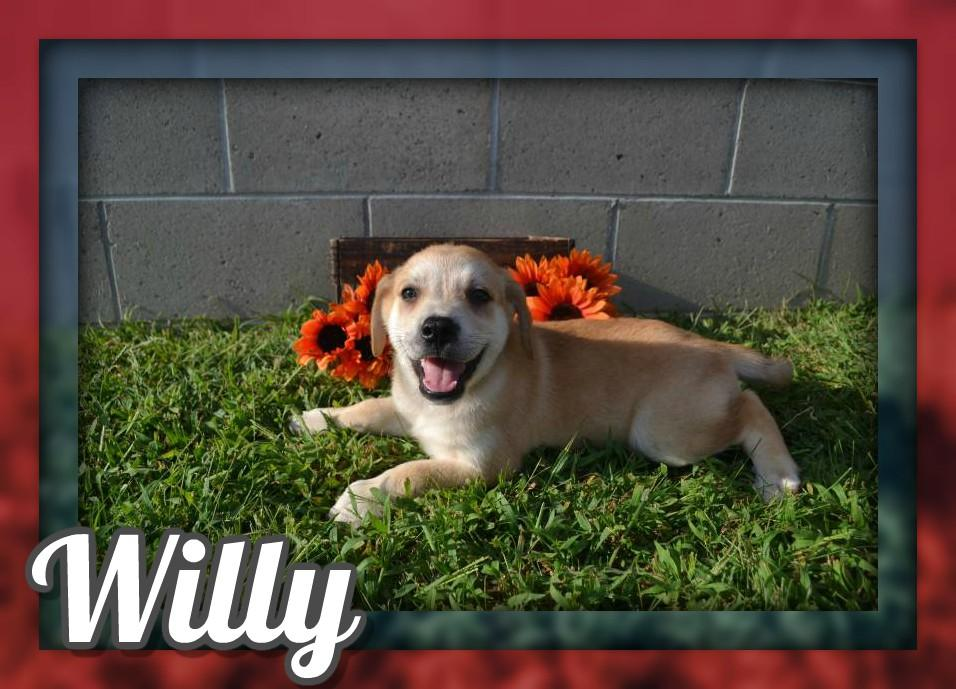 Willy Male Mountain Cur Mix