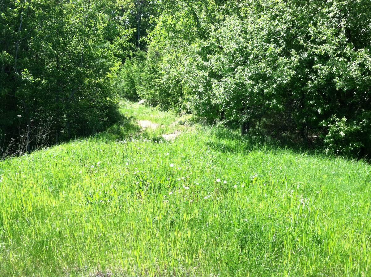 6.8 acres wooded land