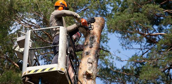 Need Tree Removal in Richmond Hill?