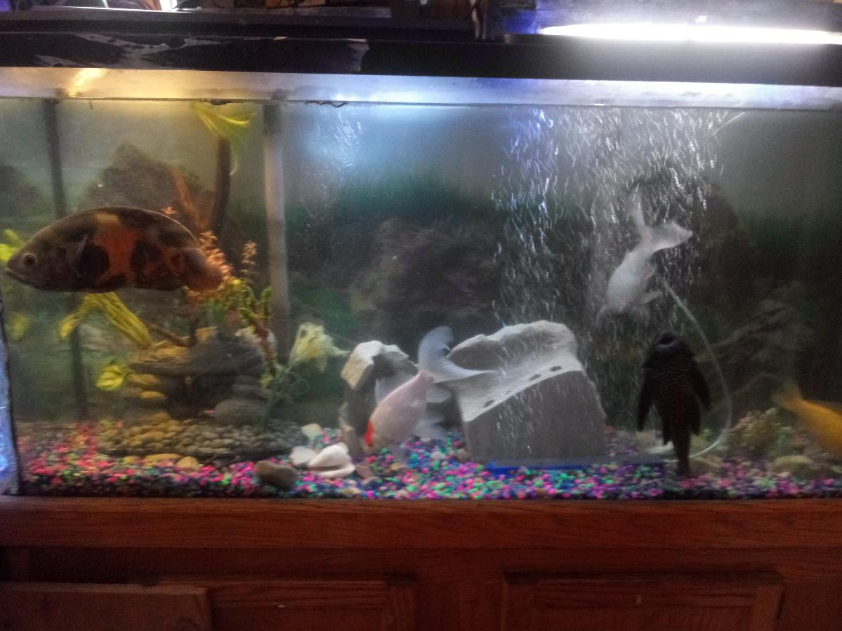 75 gallon aquarium with fish