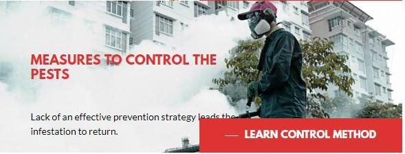 Ants Control Services in Etobicoke | Megapestcontrol.ca