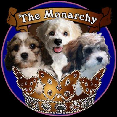 Cavapoo Puppies Maine | Cavachonsfromthemonarchy.com