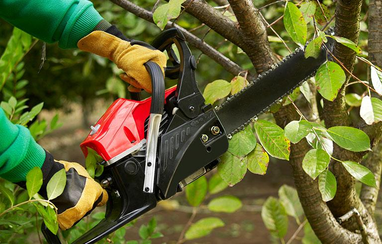 Professional Tree Trimming Service Near Me