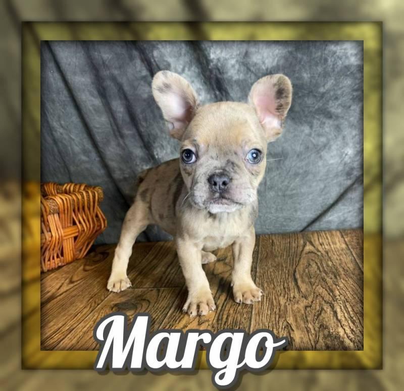 Margo Female 7/8 Frenchton