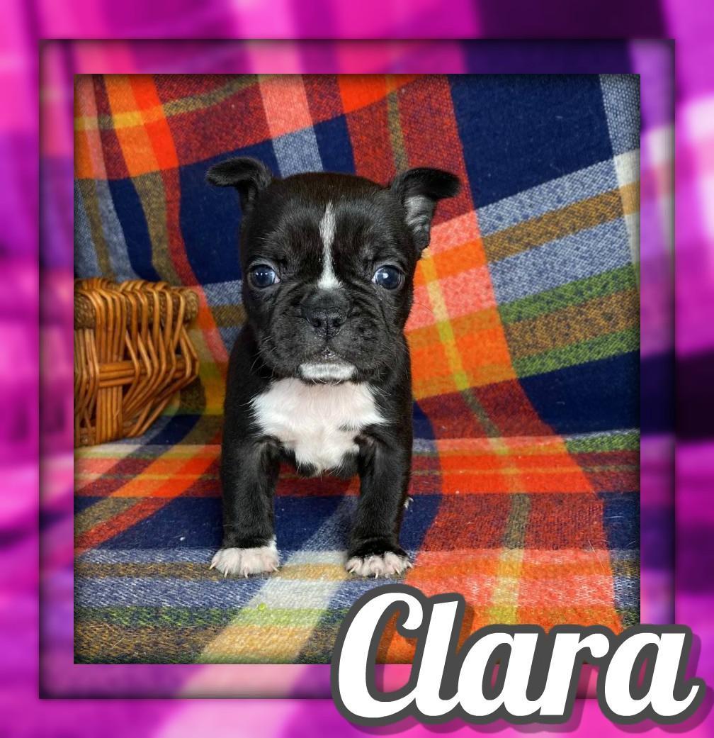 Clara Female Frenchton