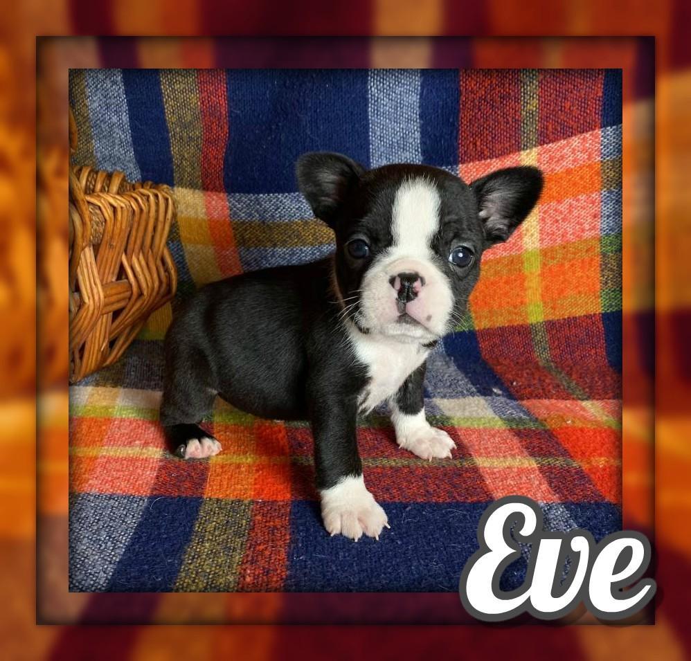 Eve Female Frenchton
