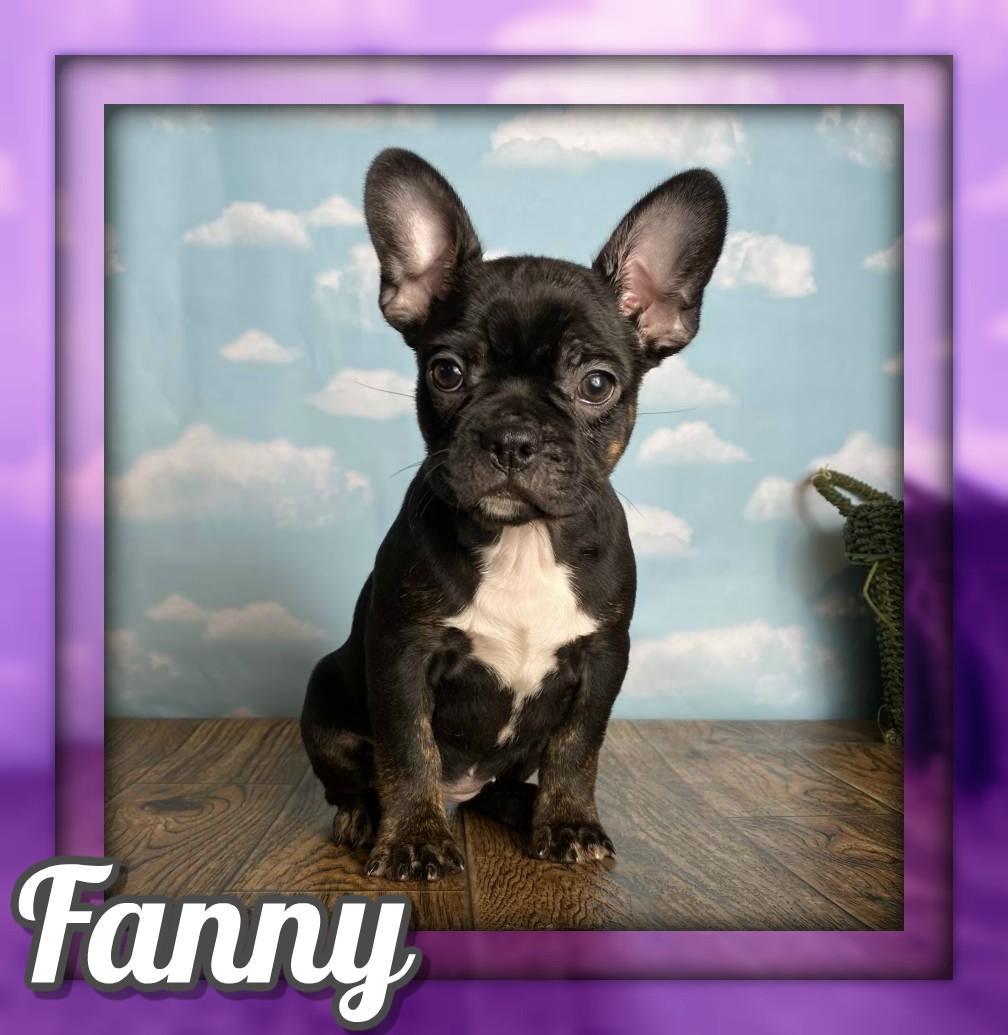 Fanny Female Frenchton