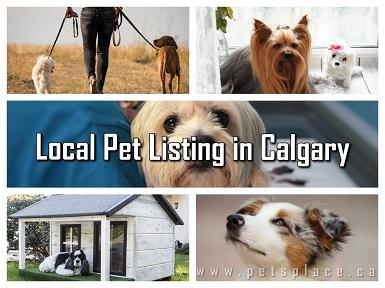 Find Reliable Services by Exploring Local Pet Listing in