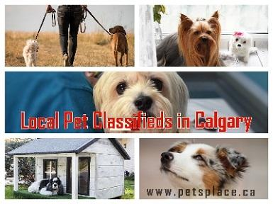 Find Tried and Tested Local Pet Classifieds in Calgary using