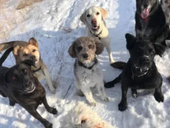 One of the best Professional Dog Walker Service in