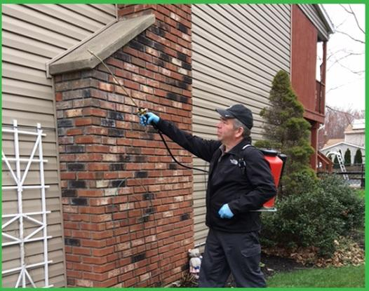 Emergency Residential Pest Control Services in Albany NY