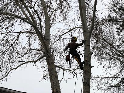 Finding for the services of Tree Pruning in South Cooking