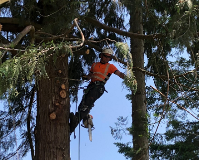 Get the Emergency Tree Removal Service in Babich